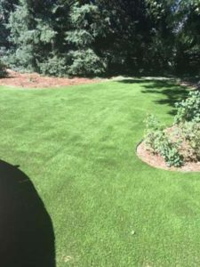 Artificial Turf Installation, ProGreen
