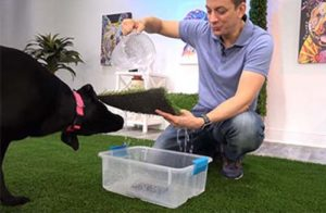 Zak George Dog Training and Artificial Grass
