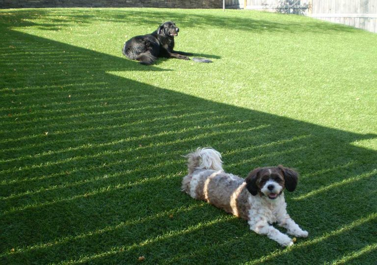 back yard for dogs