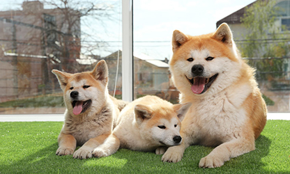 The Right Artificial Turf for Dogs